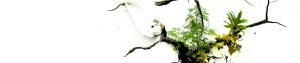 cropped-bloom_1920x1200.jpg