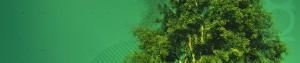 cropped-geometree_1920x1200.jpg